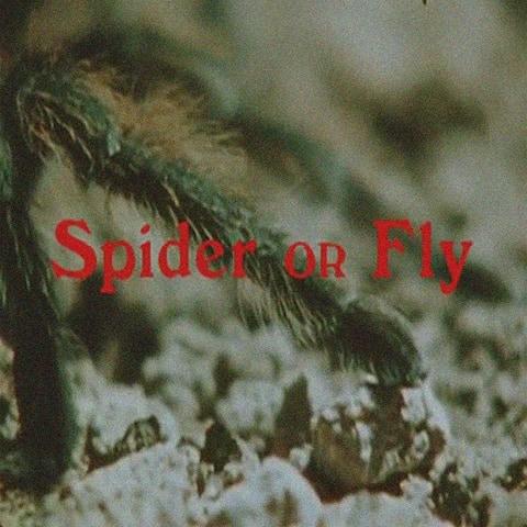 dômô kômô spider or fly