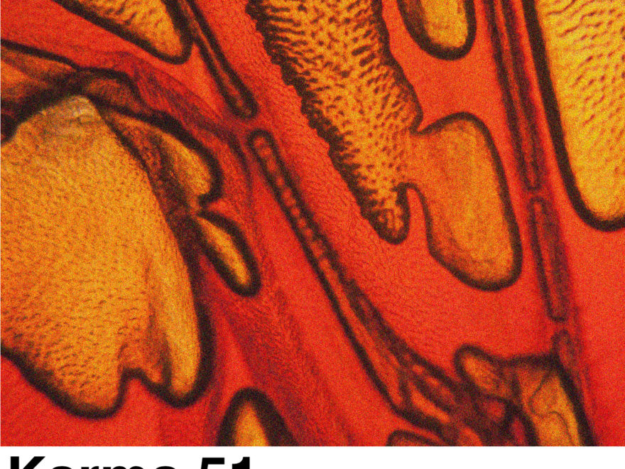 orange sanguine karma 51